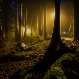 Lost in the forest by Doug Clement - Landscapes Forests ( foggy, nature, fog, night, forest, evening, light, woods )