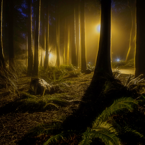 Lost in the forest by Doug Clement - Landscapes Forests ( foggy, nature, fog, night, forest, evening, light, woods, relax, tranquil, relaxing, tranquility, #GARYFONGDRAMATICLIGHT, #WTFBOBDAVIS,  )