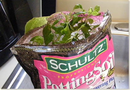 Potting Soil Surprise