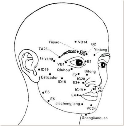 anatomia facial-jpg