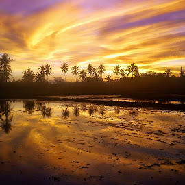 Refleksi Tak Sempurna by Randi Pratama M - Instagram & Mobile Android ( field, reflection, sunset, indonesia, golden hour )