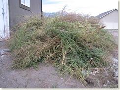 weeds 001