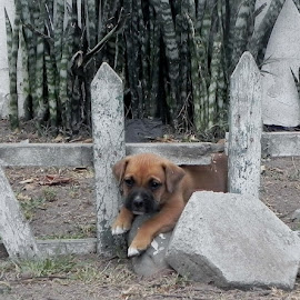 Through the fence by Tara  Smith - Animals - Dogs Puppies ( fence, puppies, pets, play, puppy,  )