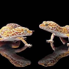let's talk about.... by Uul Setya - Animals Reptiles
