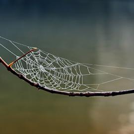 by Irena Brozova - Nature Up Close Webs