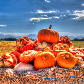 Pumpkins by Andre Bez - Food & Drink Fruits & Vegetables ( farm, colourful, food, pumpkins, vegetables, colorful, mood factory, vibrant, happiness, January, moods, emotions, inspiration )