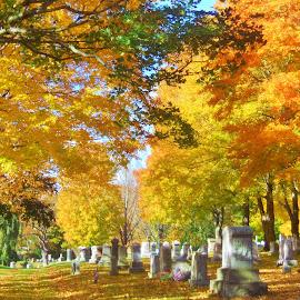 by Monica Zani - City,  Street & Park  Cemeteries