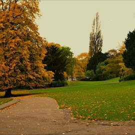 Autumn time in the park by Nic Scott - City,  Street & Park  City Parks ( park, autumn, trees, fall, color, colorful, nature )