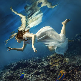 Angel underwater by Dmitry Laudin - People Fashion ( coral, girl, blue, fish, dress, white, ocean, hair )