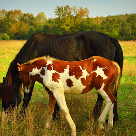 by Edie Obryant - Animals Horses