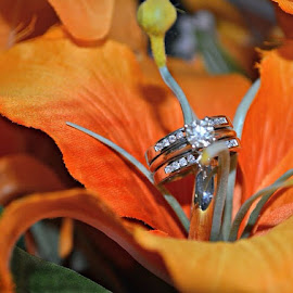 by Crystal N Jose Ayala - Wedding Details ( weddingrings, ringshot, wedding, conneautohio, aephotography, secondshooter, object, artistic, jewelry )