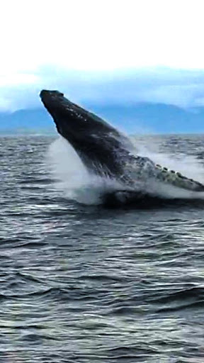 鯨魚觀賞HD
