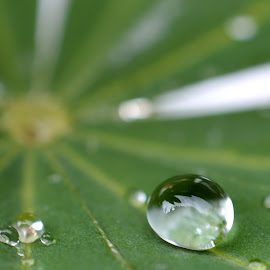 Raindrops keep falling... by Daggi Hannover - Nature Up Close Natural Waterdrops