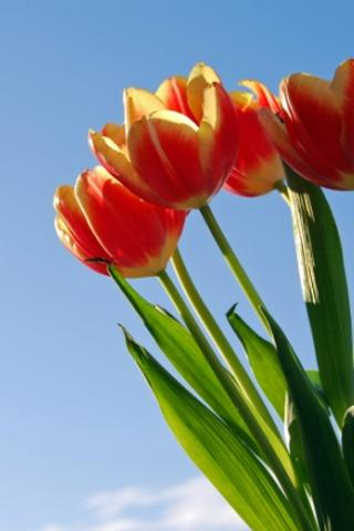 Beautiful Flower Wallpaper 1