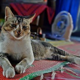 by Razone Wane - Animals - Cats Portraits