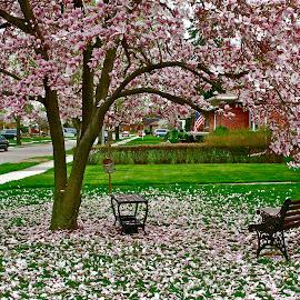 by Alexa Bessler - City,  Street & Park  Neighborhoods