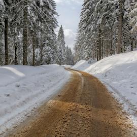 Forest road by Stanislav Horacek - Landscapes Forests