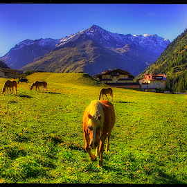 Alps by Petr Klingr - Landscapes Prairies, Meadows & Fields ( mountains, horses, hdr, meadow, alps )