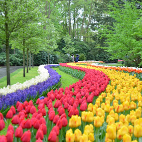 by Gobinathan Subramani - Flowers Flower Gardens (  )