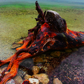 Stumped by Brian Amick - Novices Only Objects & Still Life ( water, stump, tree, colors, photography )
