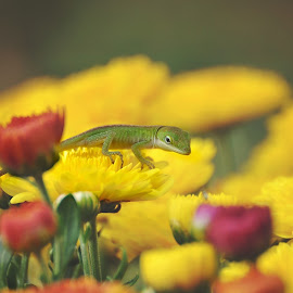 Small Lizard by Yelena Zi Photography - Animals Reptiles (  )