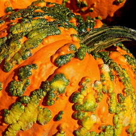 Funky punkin by Liz Hahn - Nature Up Close Gardens & Produce