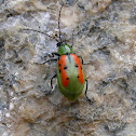 Green and orange leaf beetle