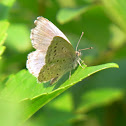 Pale grass blue