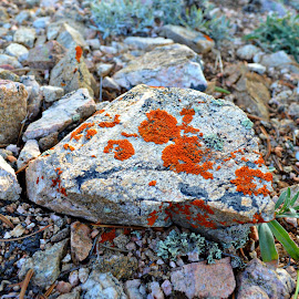 by Heather Stubbs - Nature Up Close Rock & Stone