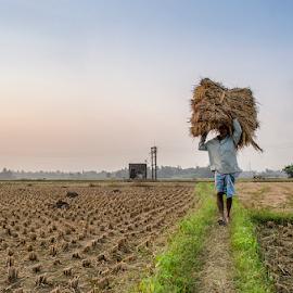 Paddy field by Sayan De - People Street & Candids ( work, paddy field, paddy, seeds, nikon, man, street photography )
