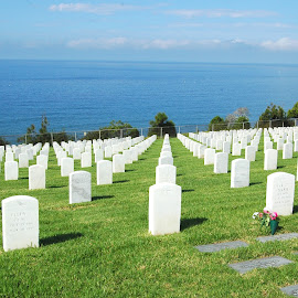 Fort Rosecrans by Jesse Thrush - City,  Street & Park  Cemeteries ( tombstone, grass, cemetary, ocean, military )