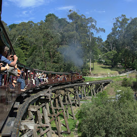 Puffing Billy, Melbourne by Melanie Chieng - Transportation Trains ( melbourne, puffing billy, train, transportation, travel )