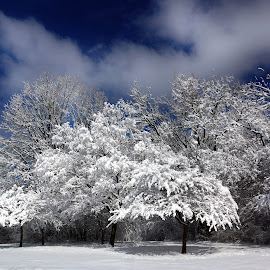 Last Snowfall by Dawn Coen - Landscapes Weather ( snow & ice, snow, trees, landscapes )