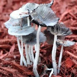 by Belinda Lentz - Nature Up Close Mushrooms & Fungi