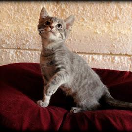 by Christie Sassenrath - Animals - Cats Kittens