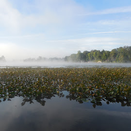 Misty Morning by Aires Spaethe - Nature Up Close Water ( water, lilly pads, lake, morning, mist )
