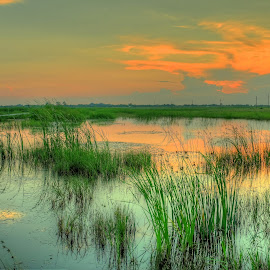 green water by Cornelius D - Landscapes Prairies, Meadows & Fields