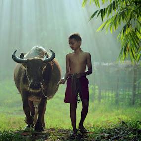 sang penggembala by Ramadhan Bagaskara Arya Parmuka - Babies & Children Child Portraits ( kerbau )