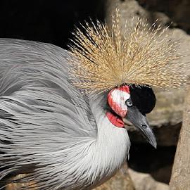 Lowry Park Zoo 40 by Terry Saxby - Animals Birds ( bird, zoo, park, terry, florida, tampa, usa, saxby, nancy, lowry )