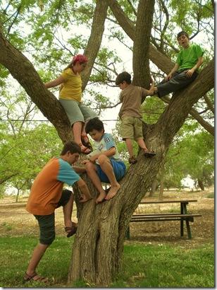04 tree climbing