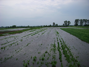 flooded farm