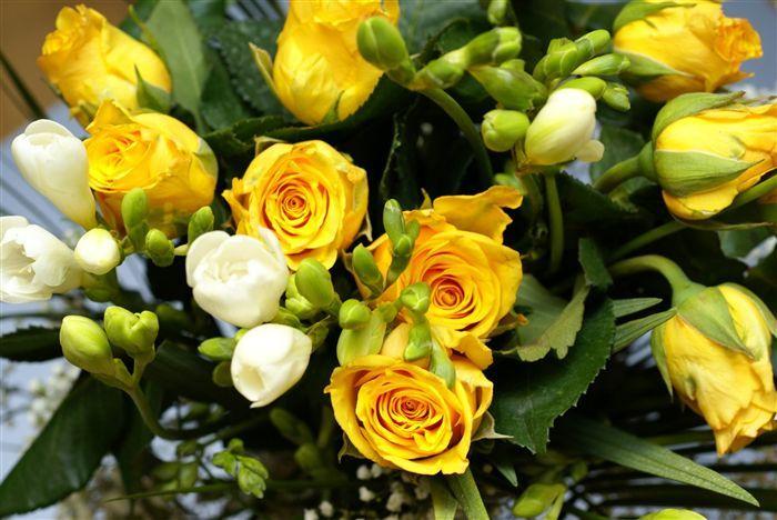 http://lh4.ggpht.com/maracaprio/SJo4ARB0yVI/AAAAAAAABQc/Nk_h9p5xTyk/s800/yellow-roses-bouquet-00847_high.jpg