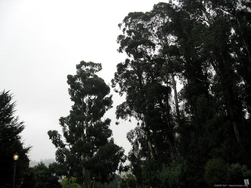 Eucalyptus Grove and West Circle