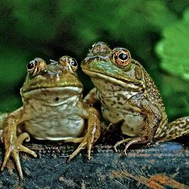 Hanging Tight by Michael Crawley - Animals Amphibians