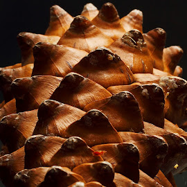 Nature made Pattern by Sanjib Paul - Abstract Patterns ( pinecone, abstract, nature, pattern, beautiful, natural )