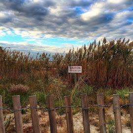 by Elisa Romano - Landscapes Beaches ( poison, autumn colors )