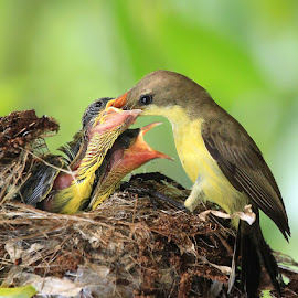 by Prachit Punyapor - Animals Birds ( pwc95: cutest baby animals, baby, young, animal )