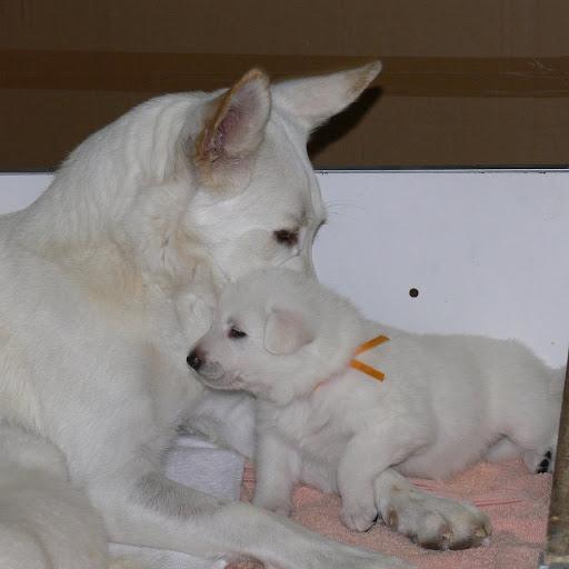 Puppies at 3 weeks