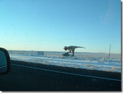Dinosaur running towards I40