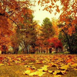 autumn in park by Nenad Milic - City,  Street & Park  City Parks